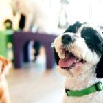 Pet Industry Branding Agency